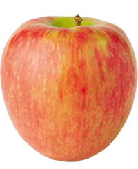 Apple King - Honeycrisp