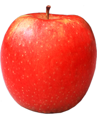 Apple King - Jonagold